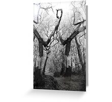 Tree Landscape Greeting Card
