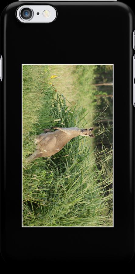 Kangaroo Cellphone Case 11 by Gotcha29
