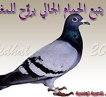 Tunisian saying  doves by cherif Nidhal