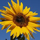 The sunflower Inn 2 by the57man