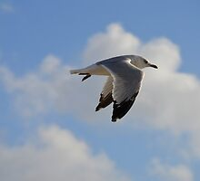 Seagull Wings by WetProductions