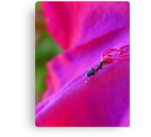 Abuelita's Garden Ant Canvas Print