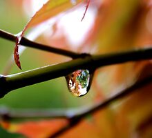 Droplet. by Tania Chatterjee