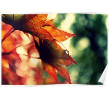 Autumn Bokeh! Poster
