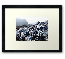 Mysterious Bivalves Framed Print