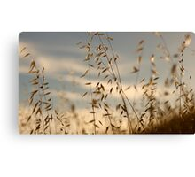 Grass in Sunset Canvas Print