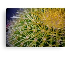 Ribbon Cactus Canvas Print