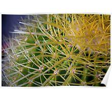 Ribbon Cactus Poster
