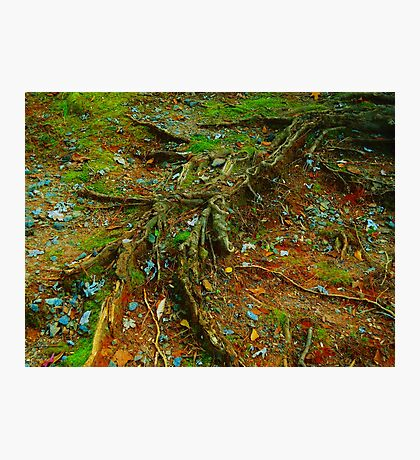 At the roots Photographic Print