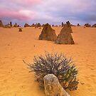 Pinnacles Solitude by ImagesbyDi