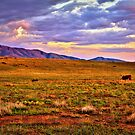 Sunset Pasture by K D Graves Photography
