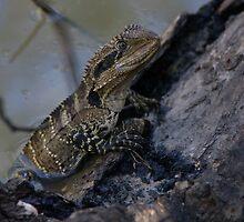 Water Dragon by Liz Worth