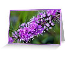Pink Kunzea Flowers & Buds Greeting Card