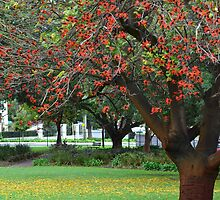 Yellow Leaves Flame Tree by GrannyMay