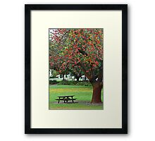 Yellow Leaves Flame Tree Framed Print