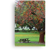 Yellow Leaves Flame Tree Canvas Print