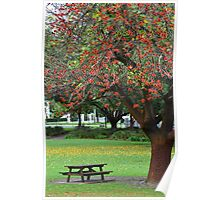 Yellow Leaves Flame Tree Poster