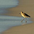 Willet and Beach by Heather Pickard