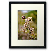 Blueberry flowers Framed Print