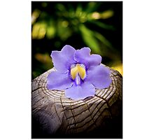 Elegant Flower Photographic Print