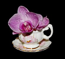 Orchid Still Life by AnnDixon