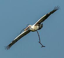 Spot-Billed Pelican by diwa2000