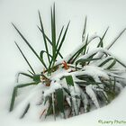 Look of the Tropics in Winter by BarbL