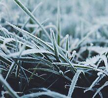 Morning Frost by helloimbethany