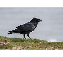 Raven. Photographic Print