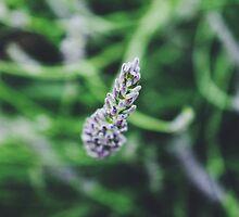 Lavender by helloimbethany