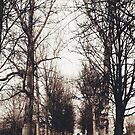 Bare Branches by helloimbethany