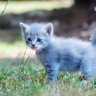 Little Blue... by Tracie Louise