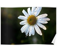 Dew Drops On Flower Poster