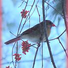 The Bittersweet Berries Supplement the Female Cardinal by TrendleEllwood