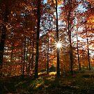 Autumn Trees by Martina Cross