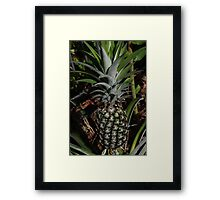 Pineapple Love Framed Print