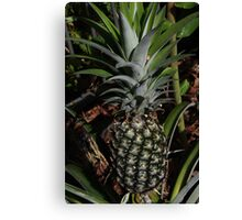 Pineapple Love Canvas Print