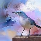 Mexican Jay by Barbara Manis