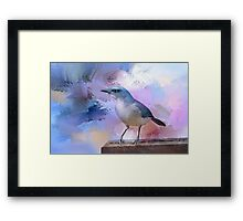 Mexican Jay Framed Print