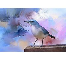 Mexican Jay Photographic Print