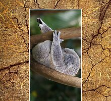 Sleepy Koala Cellphone Case 6b by Gotcha29