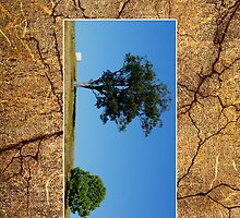 Aussie Rural Landscape Cellphone Case 16b by Gotcha29