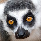 Glowing Lemur Eyes by Margaret Saheed