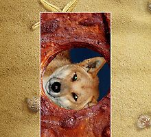 Fraser Island Dingo Cellphone Case 51b by Gotcha29