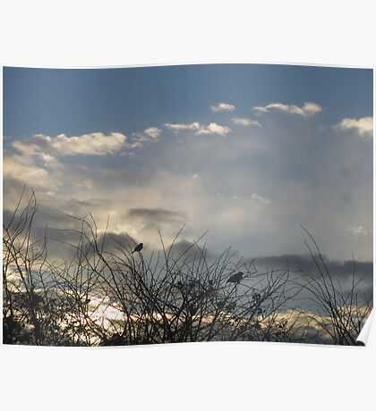 Wintry Sunrise Poster