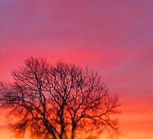 Hot Pink Sunrise by Rachel Tyrrell