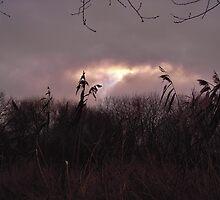 Winter Afternoon by lezvee