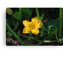 Cape Breton Squash Blossom Canvas Print