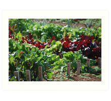 Garden Goodness Art Print