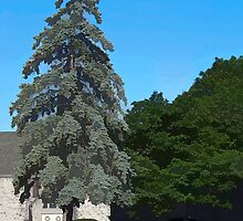 Trees by Joy  Rector